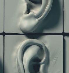 Oren gelijk talloren (hoe boetseer je een oor)