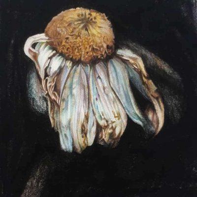 Workshop bloemen in kleurpotlood Clay-Obscuur Izegem West-vlaanderen
